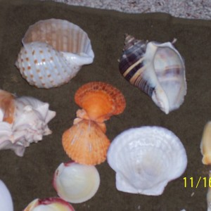 shells to swap